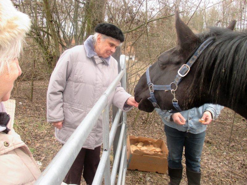 Krmení koní